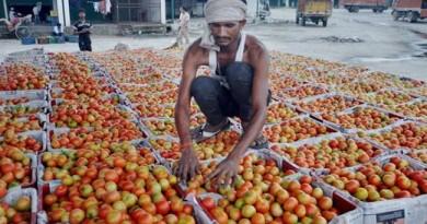 tomatoes-rs-300-kg-pakistan-wont-import-india